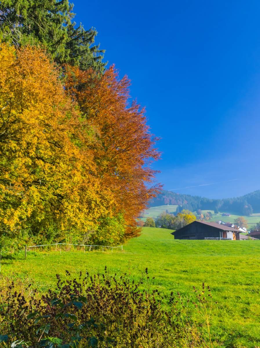Waldstück bei Girenbad im Herbst