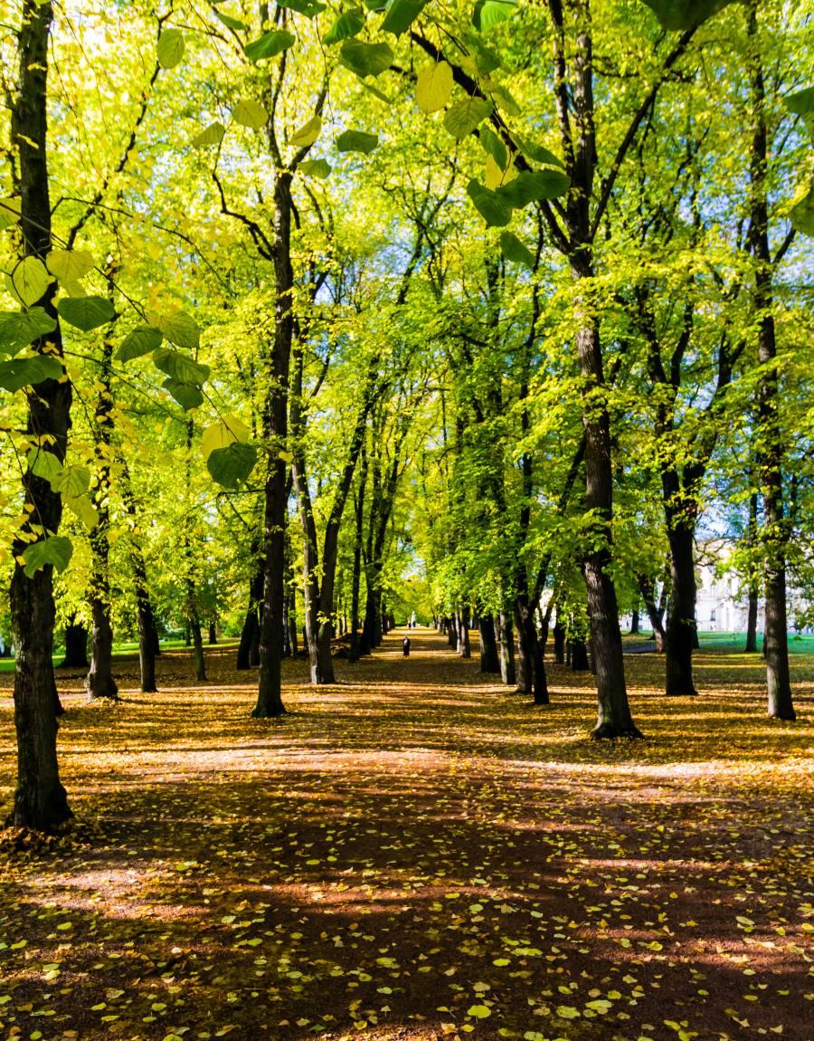 Schlosspark Oslo
