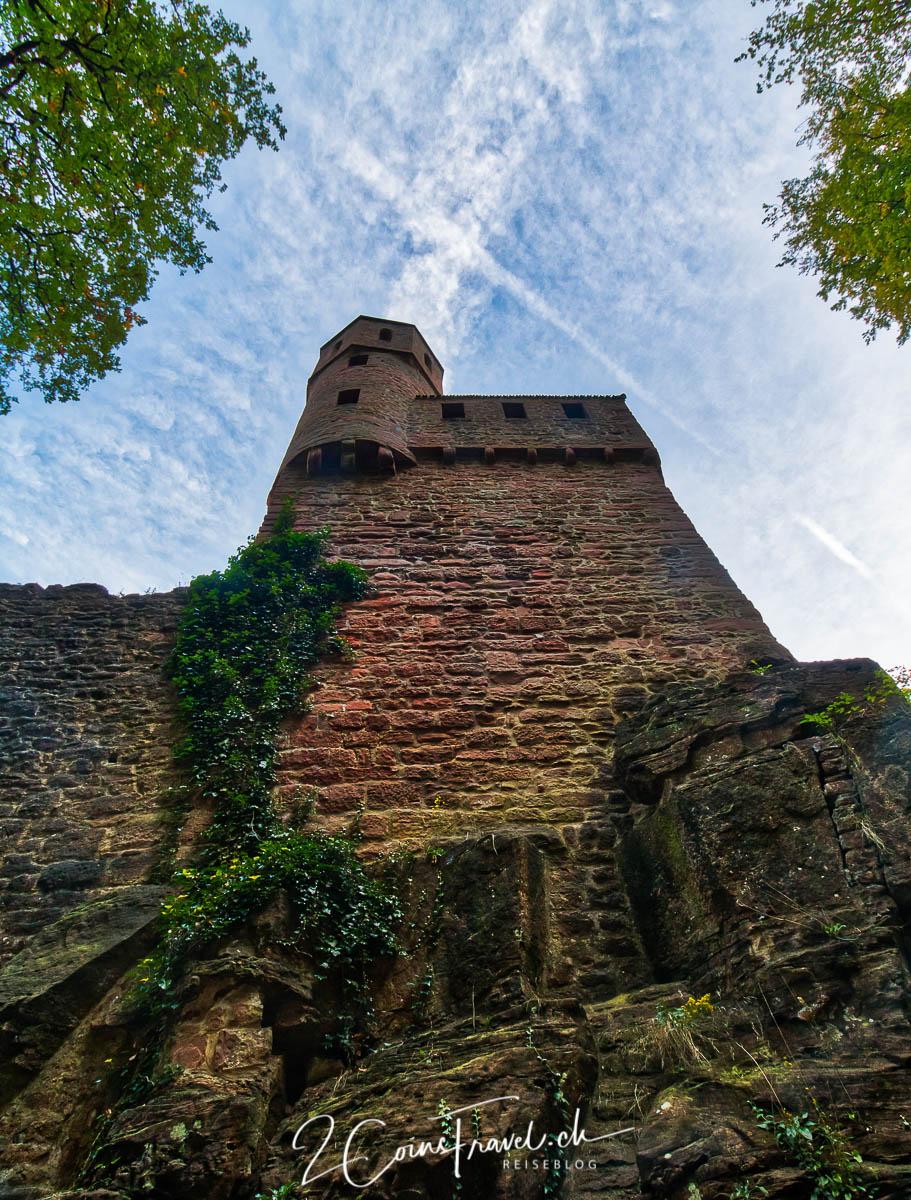 Schwalbennest Neckarsteinach