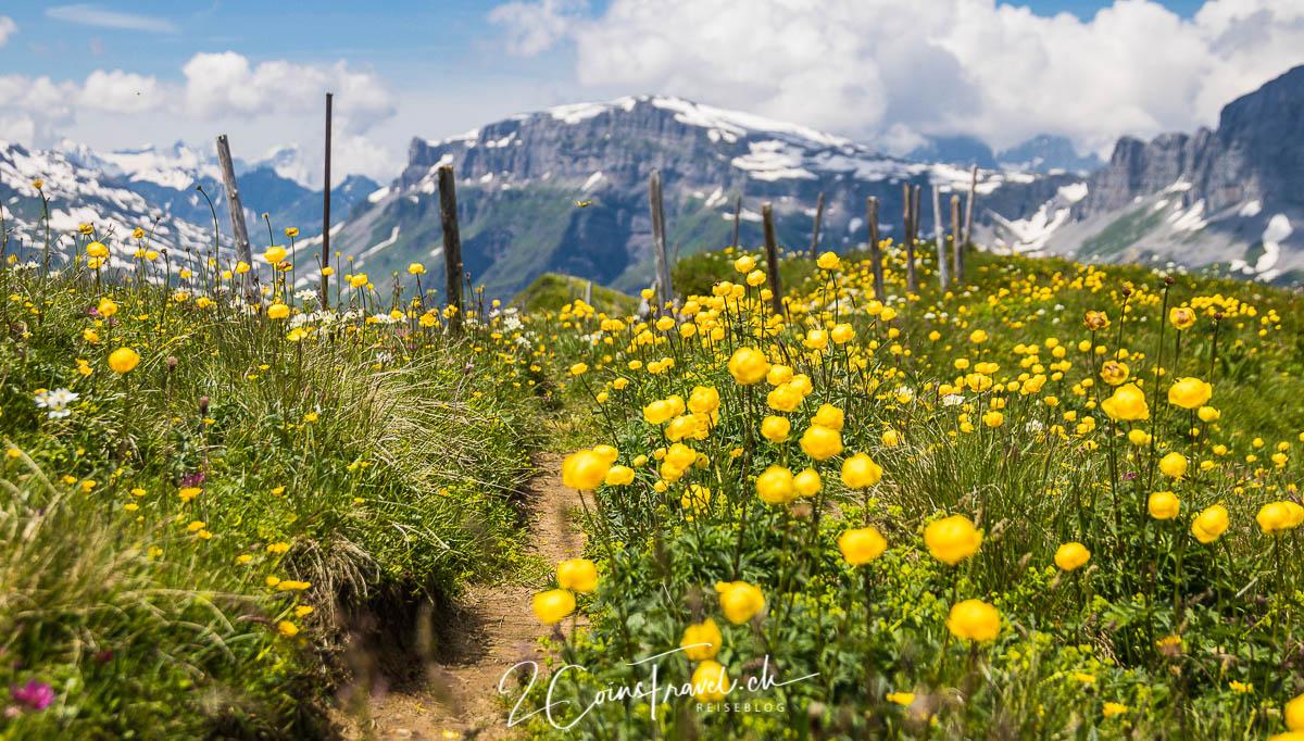 Blumen am Fisetengrat