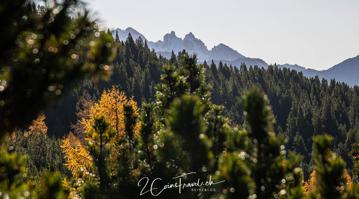 Blick über die Bäume