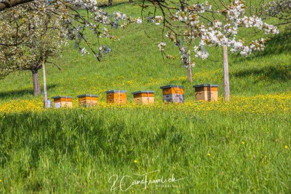 Bienenstöcke Chriesiweg
