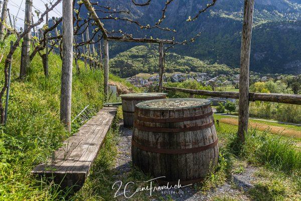 Weinreben und Fässer