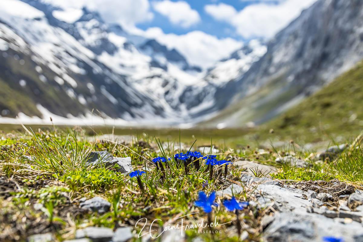 Blumen im Val Frisal