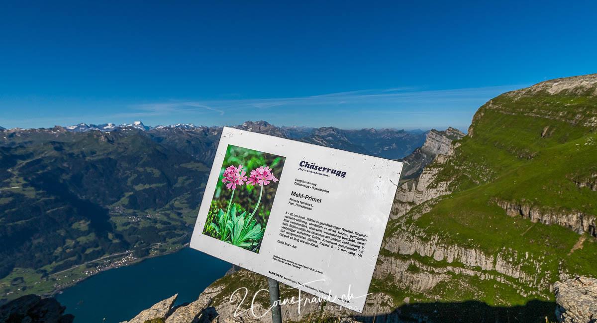 Blumenweg Alpen