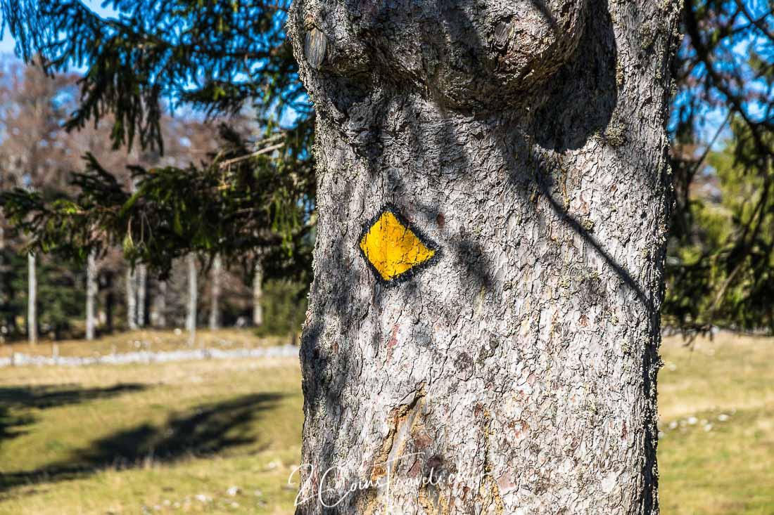 Wandermarkierung Baum