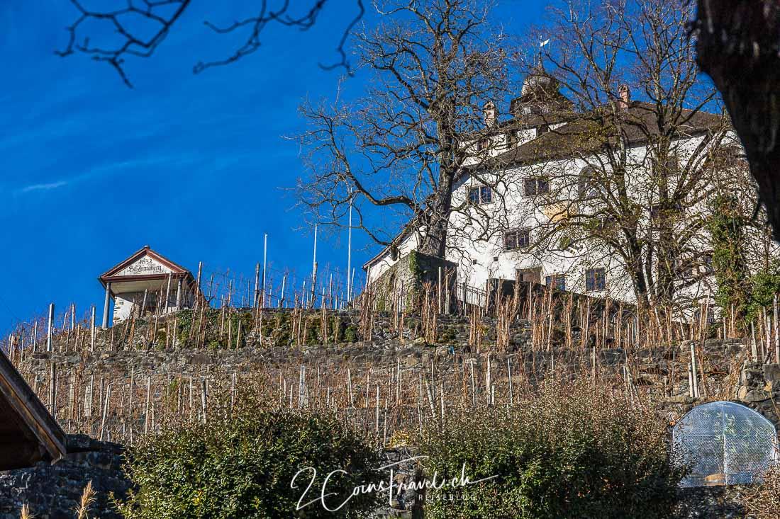 Schloss Werdenberg Weinberg