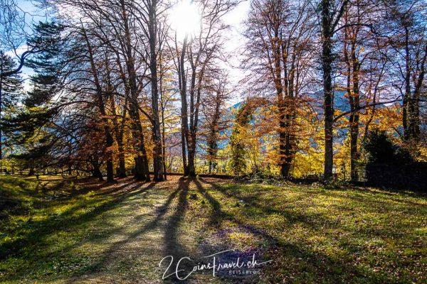 Waldweg und Sonne