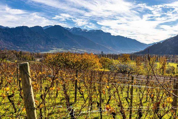 Herbstfarben im Weinberg
