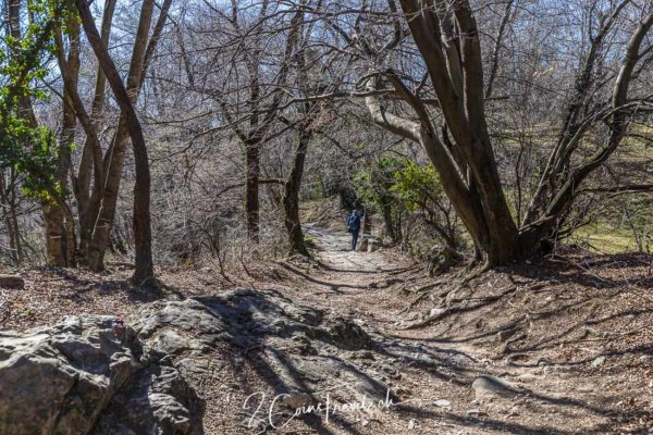 Wanderweg Monte San Salvatore