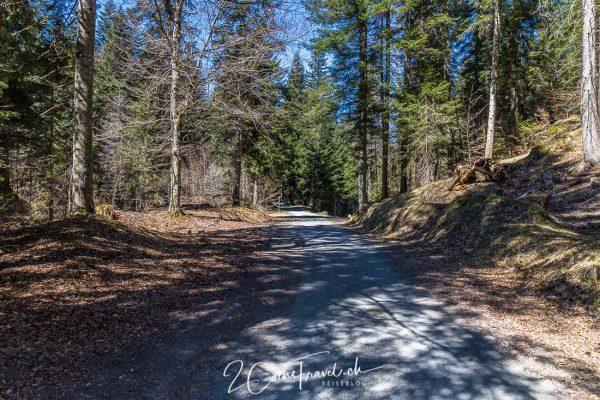Waldweg nach Flims