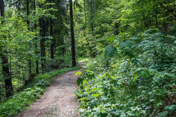 Waldweg in Richtung Schnebelhorn