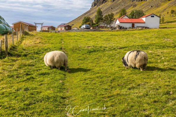 Skálafell Guesthouse und Farm